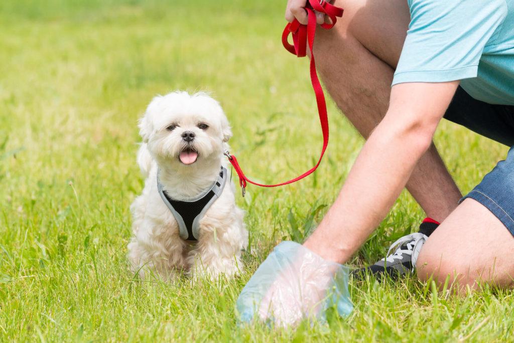 owner picking up dog poop next to a dog