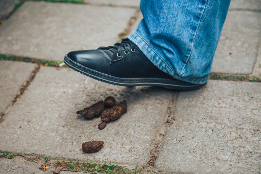 a shoe about to step in dog poop on a sidewalk