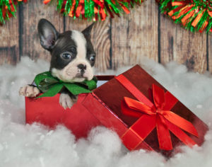Puppy in a gift box with wrapping paper and a bow