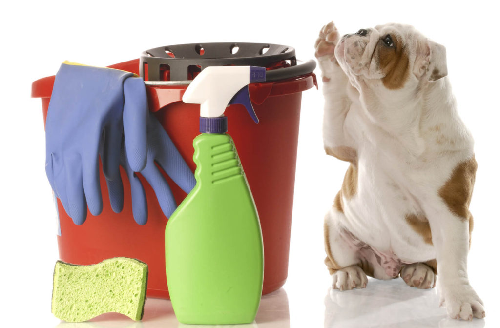 a dog raising a paw next to cleaning supplies